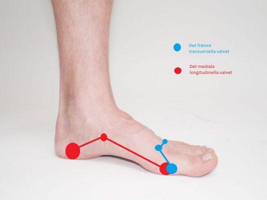 Fotens inre och främre fotvalv