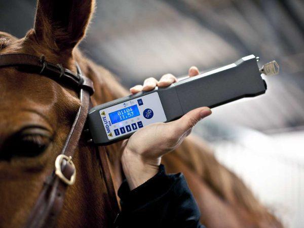 Laser-MID-LITE-904-gra-hast-veterinar